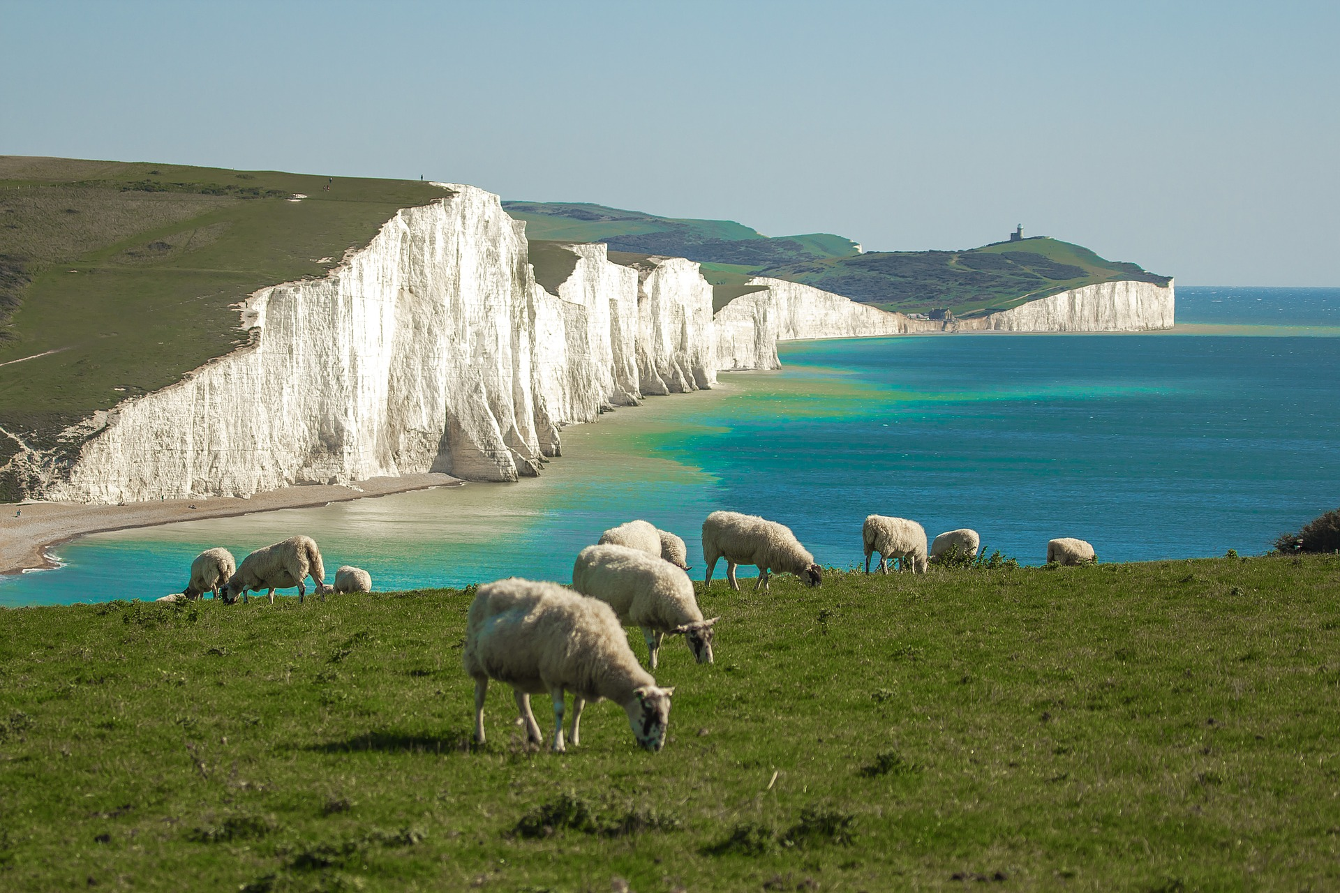 Sheep Grazing by the Ocean