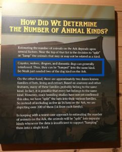 Coyotes Wolves Dingos Dogs Came From Single Male and Female According To - The Ark Encounter