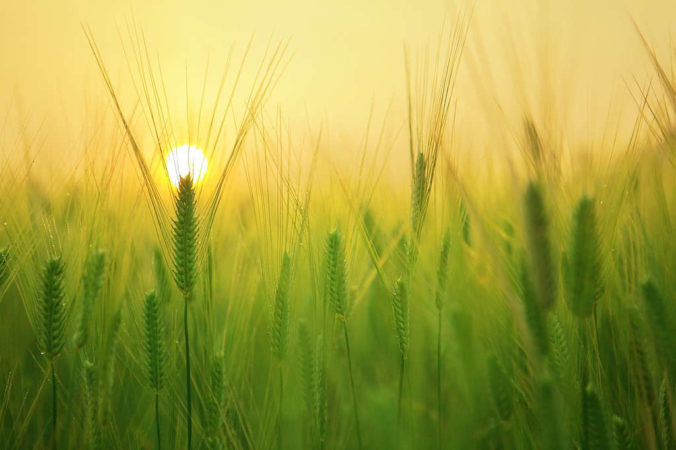 Devotions: The Harvest Is Great, But The Laborers Are Few