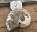 Ammonite Seashell - Ashfall Fossil Beds