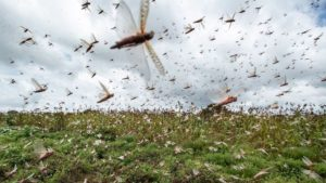 What Is The Locust Army?
